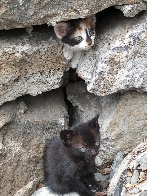 Chatons à Grand Baie
